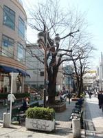 jiyugaoka356.jpg