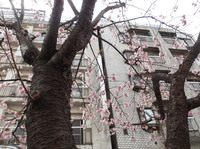 jiyugaoka438.jpg