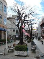 jiyugaoka460.jpg