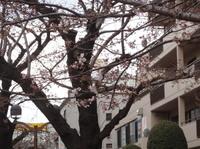 jiyugaoka461.jpg