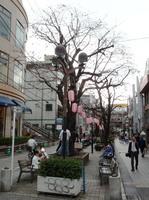 jiyugaoka465.jpg
