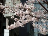 jiyugaoka473.jpg