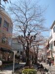 jiyugaoka75.jpg