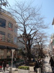 jiyugaoka98.jpg