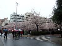 megurogawa13.jpg