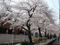 nomigawa4.jpg